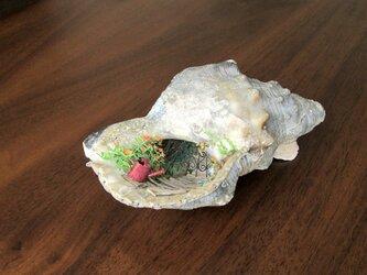 貝がら ミニチュア 散歩道の画像