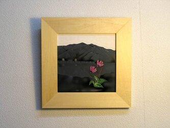 御前山・カタクリの画像