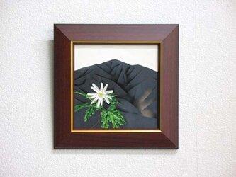 大山・キクザキイチゲの画像