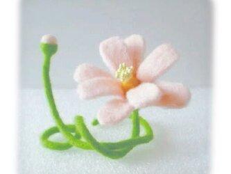 花[コスモス]の画像