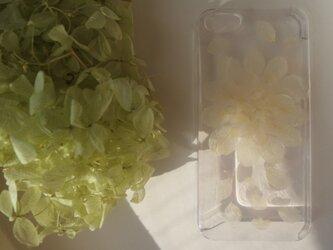 iPhone5 5s ホワイトフラワー アジサイの画像