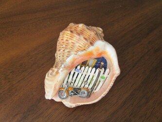 貝がら ミニチュア Rochu-の画像