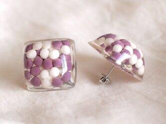 jelly cubeの画像