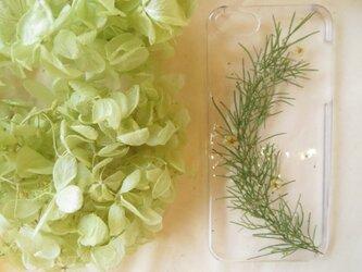 iPhone5 5s 【訳あり】グリーンリースの画像