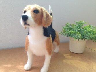 ビーグル犬b*羊毛フェルト* の画像