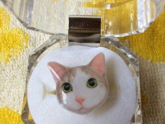 猫リングの画像