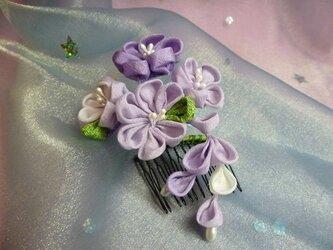 花かんざし(むらさき)の画像