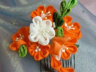 花かんざし (オレンジ)の画像