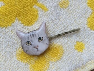 猫ピンの画像