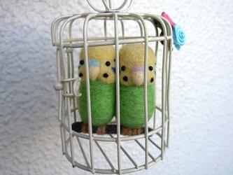 鳥籠のセキセイインコペアの画像