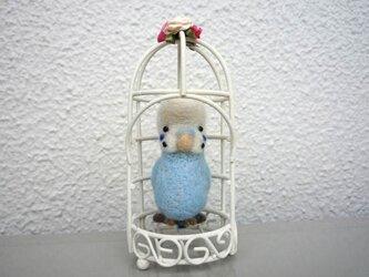 鳥籠のセキセイインコ水色Aの画像