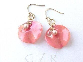petal colors*pinkの画像