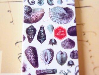 貝殻のiPhoneケース(4s,5s対応)の画像