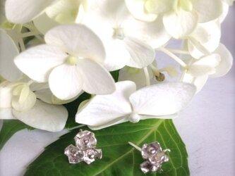 アジサイピアス Hydrangea Earringsの画像