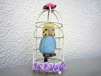 鳥籠のセキセイインコ水色Bの画像