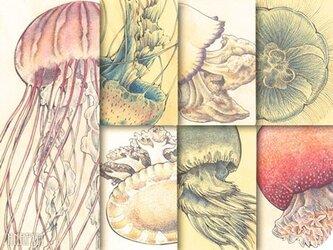 くらげ標本図ポストカード:第1集の画像