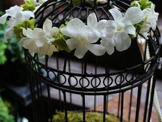 ジャスミンとデンファレの花冠の画像