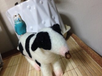 牛①の画像
