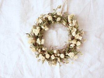 アキレア mini wreathの画像