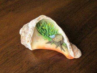 貝がら ミニチュア 青い鳥の画像