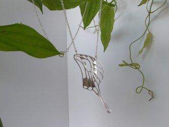 dlicate air NL(swallowtail)の画像