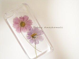 iPhone5 5s ピンクコスモスの画像