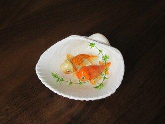 貝がら ミニチュア 蘭鋳の画像