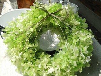 紫陽花リース  ライトグリーンの画像