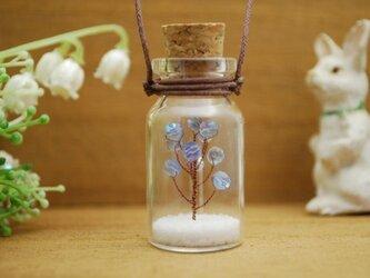 コルク瓶の中の空色の実のなる木の画像