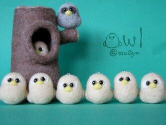 owl (ヒナフクロウ)@ベージュの画像