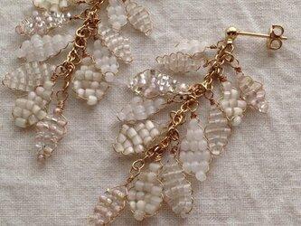 フレディ -  blanc(ホワイト)の画像