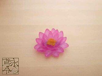 ブローチ 濃い透明ピンク色の睡蓮の画像