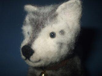 mix犬の画像