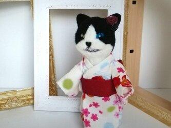 羊毛♪ハチワレ♪猫又の画像