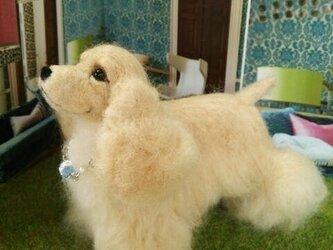 羊毛アメリカン・コッカー・スパニエルの画像