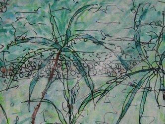 石垣島の画像