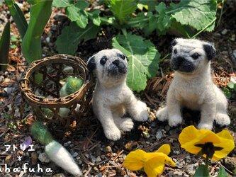 羊毛フェルト*パグ作さんご夫妻の画像
