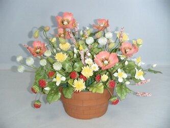 クレイフラワー(雑草の花)の画像