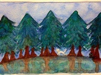 森のお散歩の画像