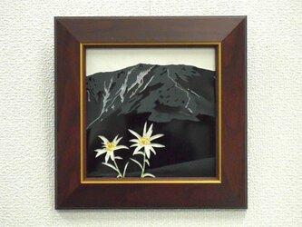 懐かしの山・思い出の花シリーズ「早池峰山・ハヤチネウスユキソウ」の画像