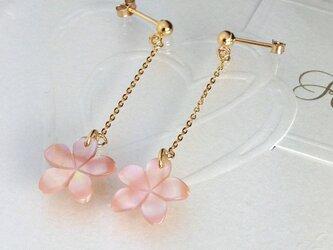 お花のピンクシェルピアスの画像