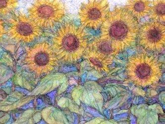 「ひまわり畑」の画像