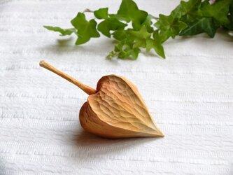 木のほおづき (大)シナの画像
