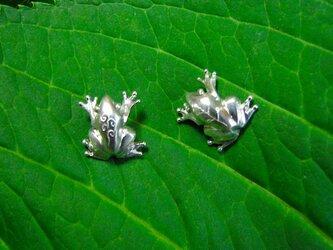 【受注制作】tree flog(ピアス)の画像