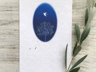 オリーブの樹と鳥 メッセージカード の画像