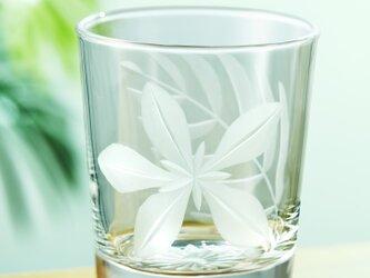 ハワイアンスタイル 東京切子(花切子)ロックグラス プルメリアの画像