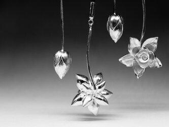 lotus lariatの画像