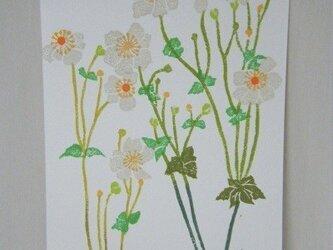 葉書〈秋明菊-1〉の画像