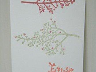葉書〈サンゴジュ-2〉の画像