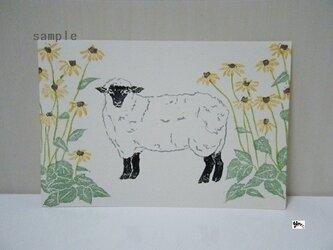 葉書〈クリザンティマムと羊-1〉の画像
